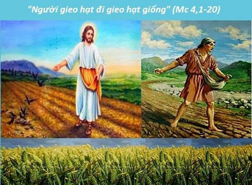 Image result for hinh dụ ngôn Người gieo giống trong Kinh Thánh