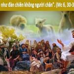 LỜI CHÚA CHÚA NHẬT XVI THƯỜNG NIÊN NĂM B (22/7/2018) – (Mc 6, 30-34)