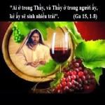 LỜI CHÚA THỨ TƯ TUẦN V PHỤC SINH NĂM LẺ (22/5/2019) – (Ga 15, 1-8) – THÁNG HOA KÍNH ĐỨC MẸ