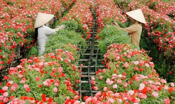 Ghé thăm các làng hoa nổi tiếng ngày giáp Tết