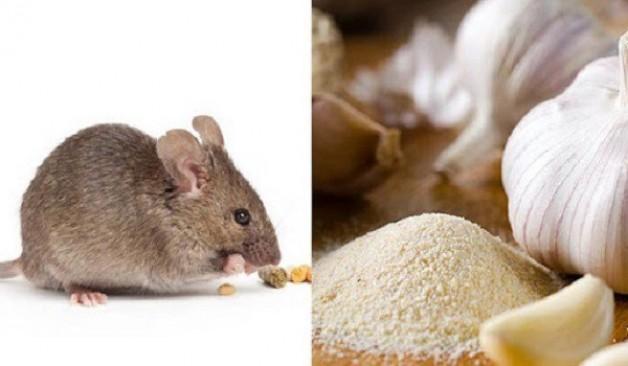8 cách đuổi chuột hiệu quả hơn dùng thuốc, bạn có thể áp dụng trong nhà