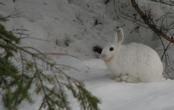 Cuộc Săn Thỏ